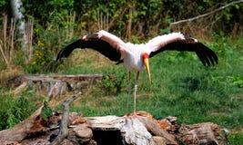 Stork på trädstubbe Royaltyfri Bild