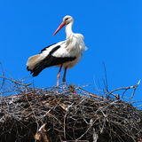 Stork perched atop nest Stock Photos