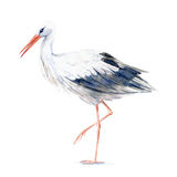 Stork. Picture of a wild bird. Royalty Free Stock Photos