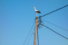 Stork on a pole Royalty Free Stock Photos