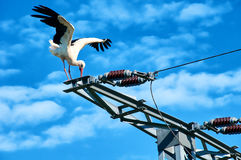 Stork in on power pole Royalty Free Stock Image