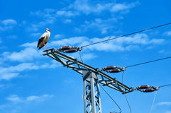 Stork in on power pole Royalty Free Stock Photos