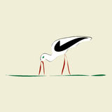 Stork with red beak and feet. On grass Royalty Free Stock Photos