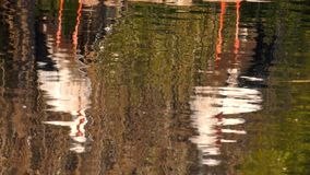 Stork Reflection on Water. And animal birds stock video