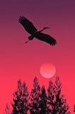 Stork rising Royalty Free Stock Photo