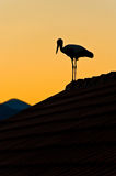 Stork on the roof. Storks on the roof in the sunset Royalty Free Stock Photo