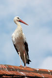 Stork on a roof Royalty Free Stock Images