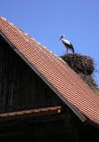 Stork On the Roof stock image