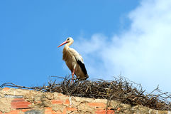 Stork Stock Images