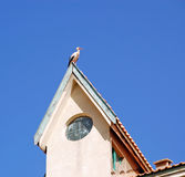 Stork on the roof, Morocco Royalty Free Stock Images