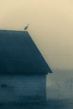 Stork on the roof, Poland Royalty Free Stock Photos