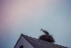 Stork on the roof Stock Photos