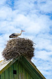 Stork on roof of village house on background of sky. Stork in nest on roof of village house on background of blue sky Royalty Free Stock Images