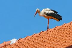 Stork on roof Stock Image