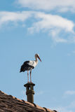 Stork on the roofs Stock Photo