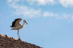 Stork on the roofs Stock Photos