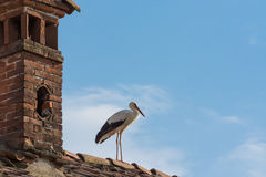 Stork on the roofs Royalty Free Stock Photography