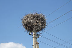 Stork's nest Royalty Free Stock Photography
