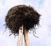Stork's nest Stock Image