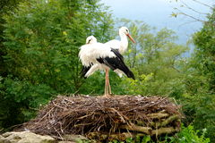 Stork's nest stock images
