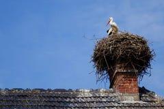 Stork Royalty Free Stock Photo