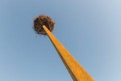 Stork`s nest on electricity pole top Royalty Free Stock Photography
