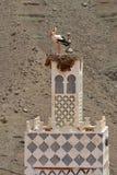 Stork's nest Royalty Free Stock Images