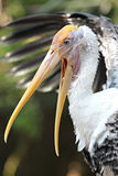 Stork's opened my mouth. Royalty Free Stock Images