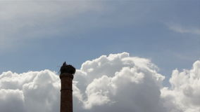 Stork's standing in nest on top of old chimney stock video footage