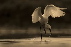 A stork, a shrimp and mother nature royalty free stock photography