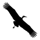 Stork silhouette Stock Photography