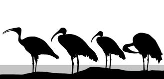 Stork silhouettes - vector Stock Images