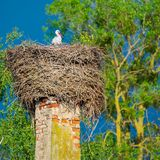 The stork sits in its nest. On the house`s stack in the spring sunny evening stock photography