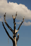 Stork sitting on a burned tree Stock Images