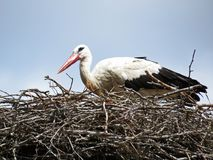 Stork Sitting on a Nest with Clouds on the Sky in Background royalty free stock photography