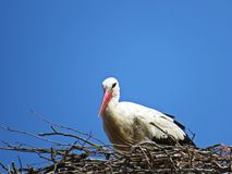Stork Sitting on a Nest with Clouds on the Sky in Background stock photos