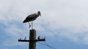 Stork sitting on a pillar high voltage power lines on sky background. Stork sitting in a nest on a pillar high voltage power lines on sky background. Stork sits stock footage