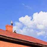 Stork sitting on the top of a roof Royalty Free Stock Photos