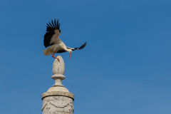 A stork slipping on top of a monument in Faro, Algarve Stock Photos