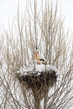 Stork and snow Stock Image