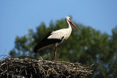 Stork on the socket Stock Images