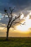 Stork som två plattforer på en torr tree Arkivbilder