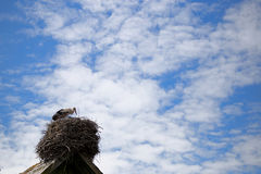 Stork standing in its nest in warm weather Stock Photography
