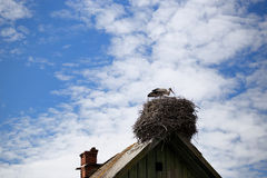 Stork standing in its nest in warm weather Royalty Free Stock Photography