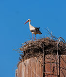 Stork standing in the nest and looks around. Stock Photos