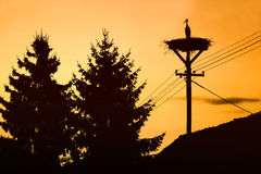 Stork standing in nest at sunset Stock Photos