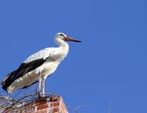 Stork standing on The Old Brick Chimney. European Migrant Stork standing on The Old Brick Chimney in Tasucu,Turkey Stock Photos