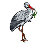 Stork standing on one leg and holds a frog in beak Stock Photo