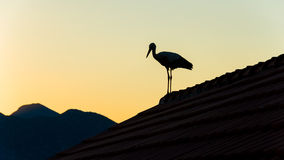 Stork standing on the roof against colorful sky Royalty Free Stock Image