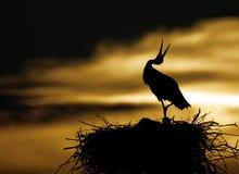 Stork in sunset. Siluette of stork in the nest in sunset Stock Photo